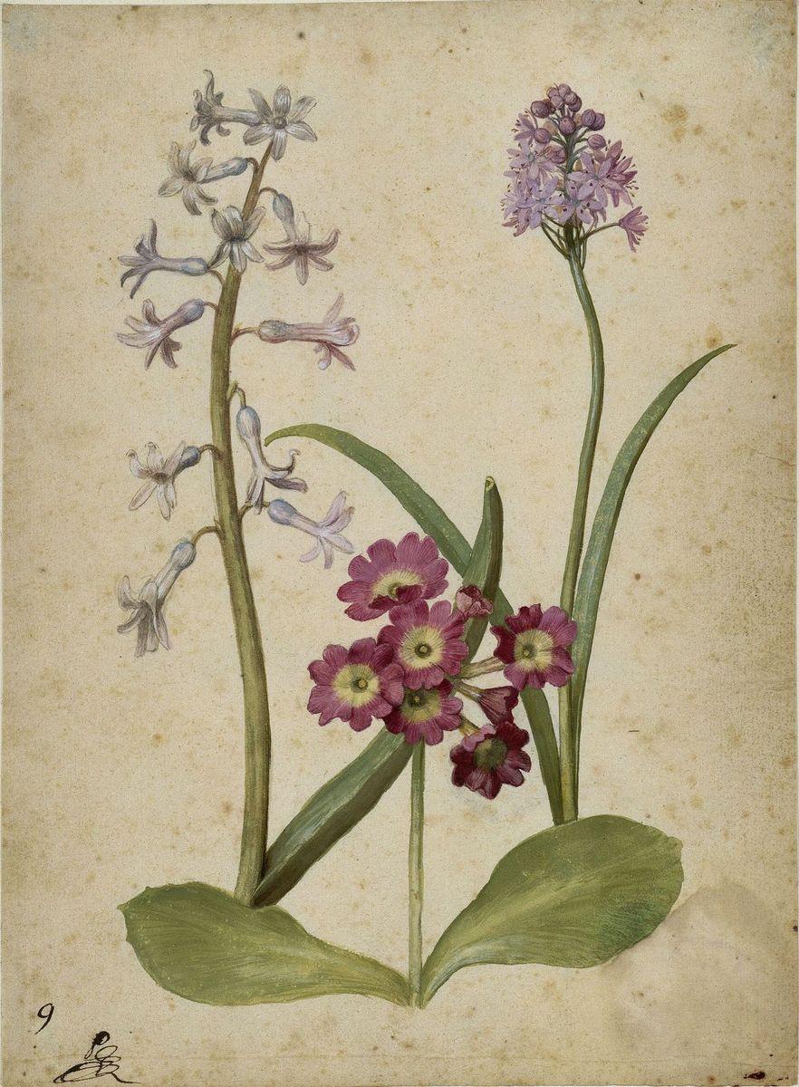 Georg Flegel: Hyazinthe, Gartenaurikel und Italienisches Hasenglöckchen, um 1630  (c) bpk / Kupferstichkabinett, SMB / Jörg P. Anders