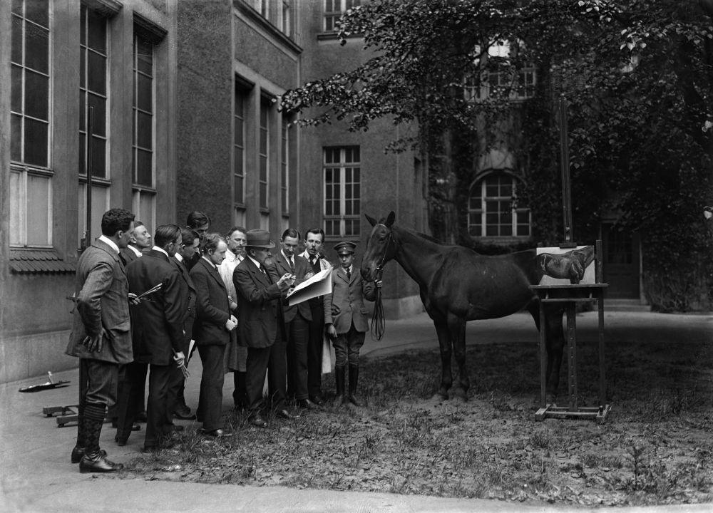 Tierstudien im Freien, Unterrichtsanstalt des Kunstgewerbemuseums Berlin ©bpk, Kunstbibliothek, SMB, Photothek Willy Römer/Willy Römer