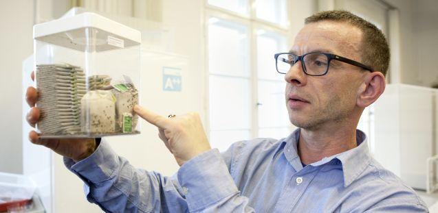 Der Entomologe Bill Landsberger in seinem Labor im Rathgen-Forschungslabor. Foto: Juliane Eirich