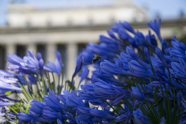 Altes Museum Sommer