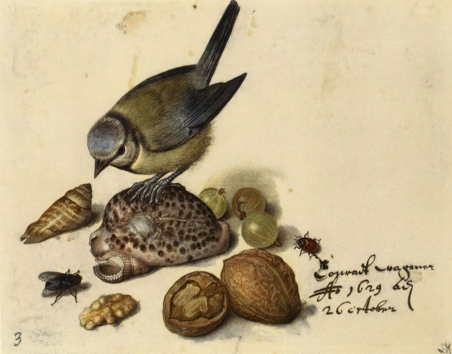 Georg Flegel: Stilleben mit Blaumeise, Muscheln, Früchten und Insekten (1629) (c) bpk / Kupferstichkabinett, SMB / Jörg P. Anders