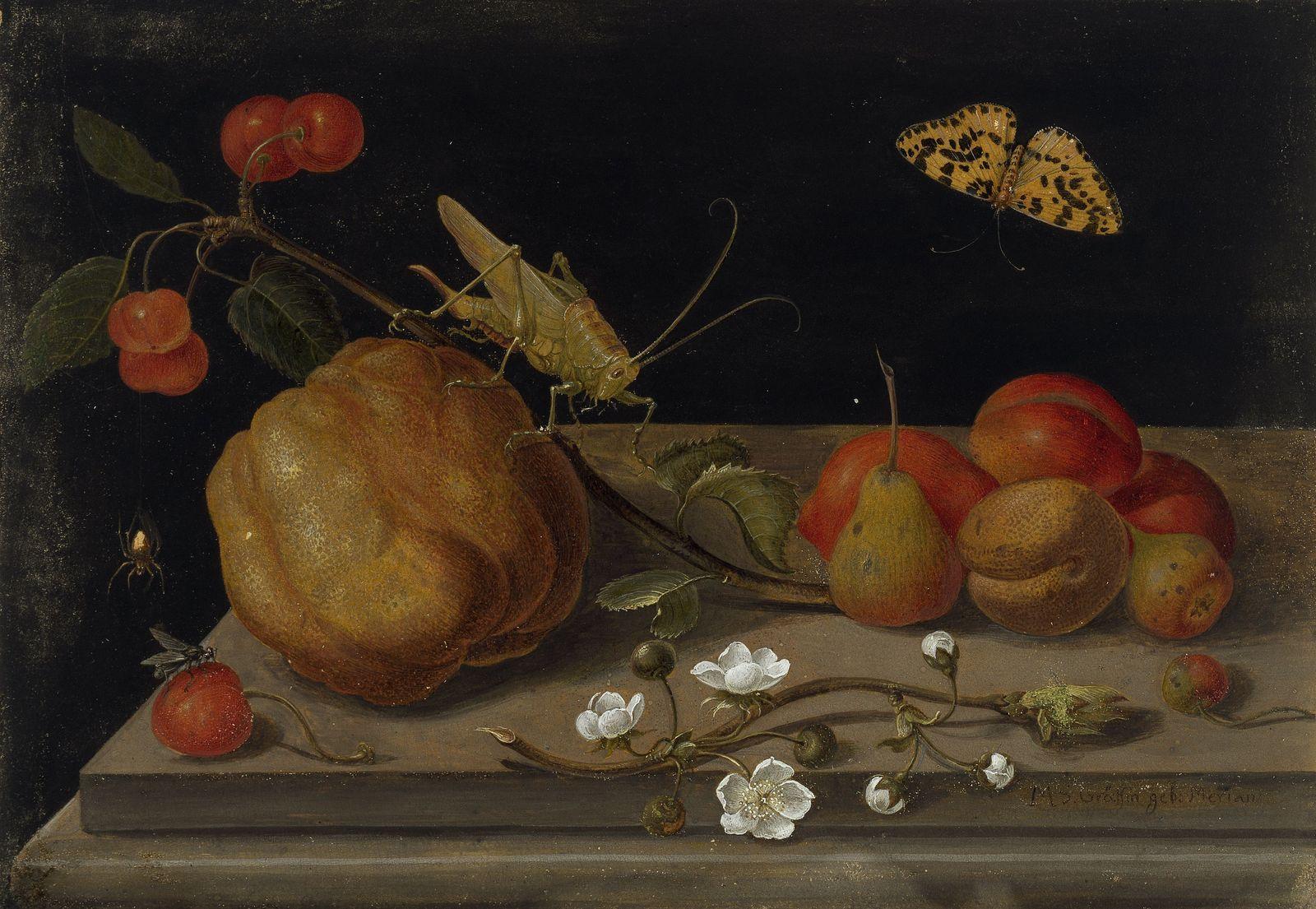 Maria Sibylla Merian: Stillleben mit Früchten, einer Heuschrecke und einem Schmetterling (1670-1680);  (c) Kupferstichkabinett, SMB